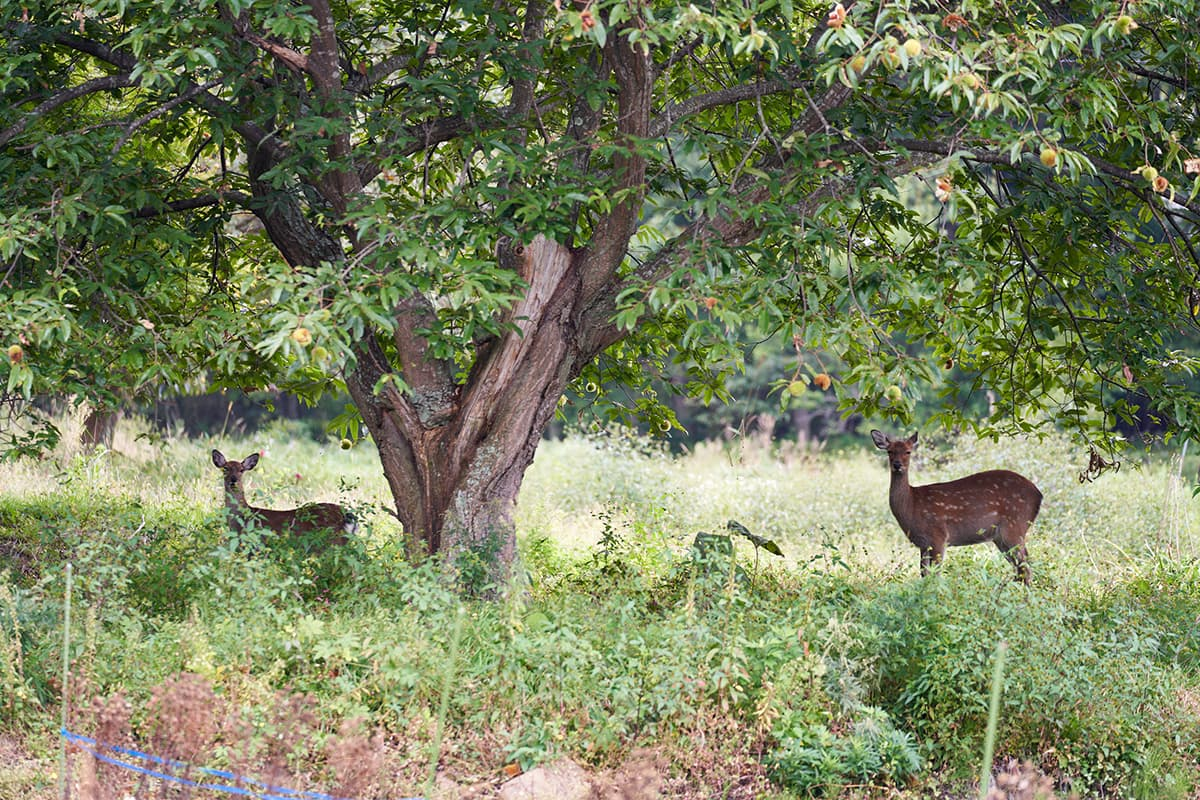 Nature and deer